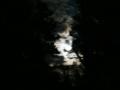 La notte a Cognoli